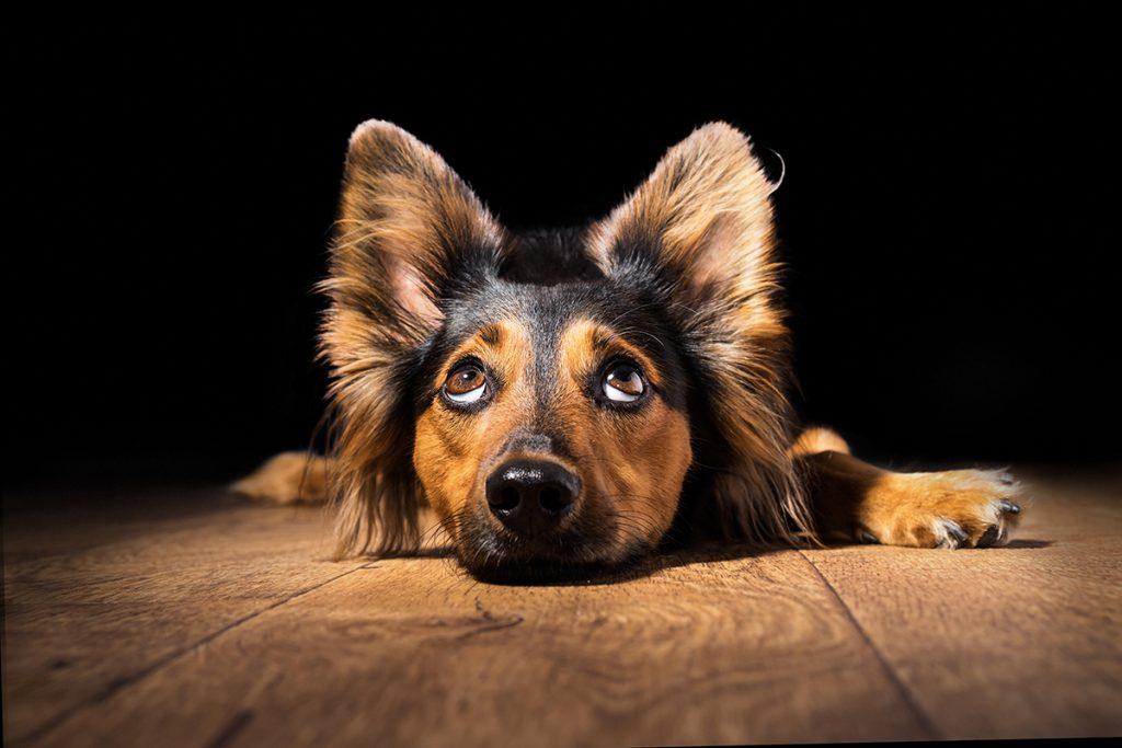 Es importante desparasitar nuestro perro